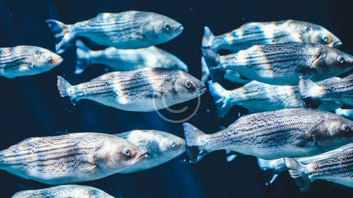 Fish Types and Veriety